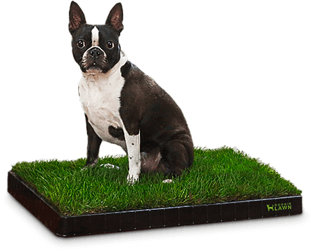 Doggie Lawn - Real Dog Patio Potty Grass For Indoor Puppy Training