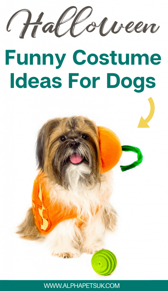 funny Halloween costume ideas for dogs