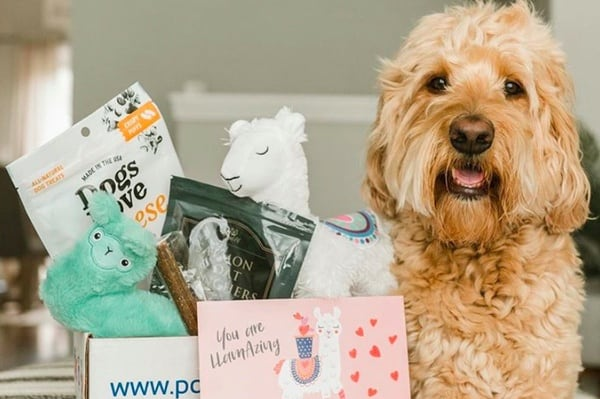 Pooch Perks Premium Customized Dox Box For Dogs Of All Sizes