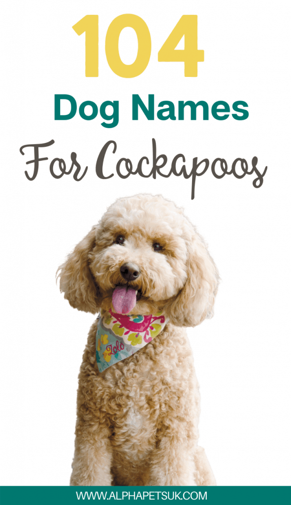 cockapoo name ideas for girls and boys