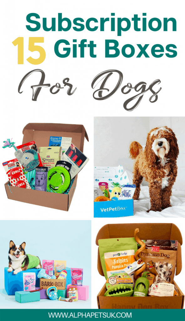 Dog monthly gift boxes
