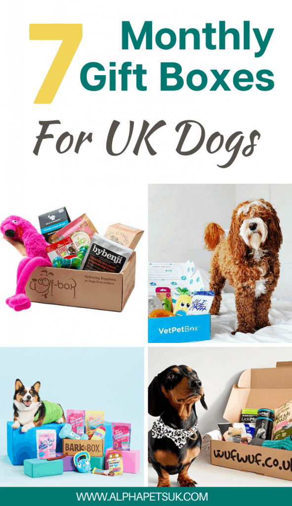 UK monthly subscription boxes dogs