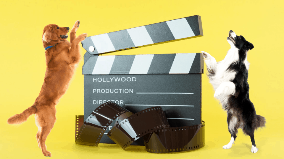 movies with dogs and puppies - pet movies