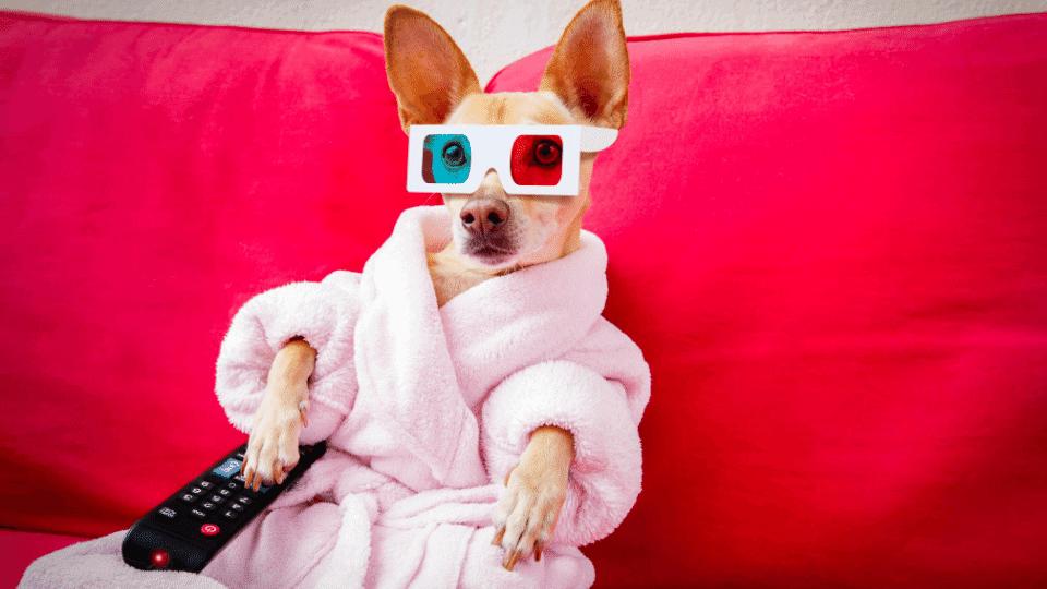 animal movies amazon prime video netflix dogs