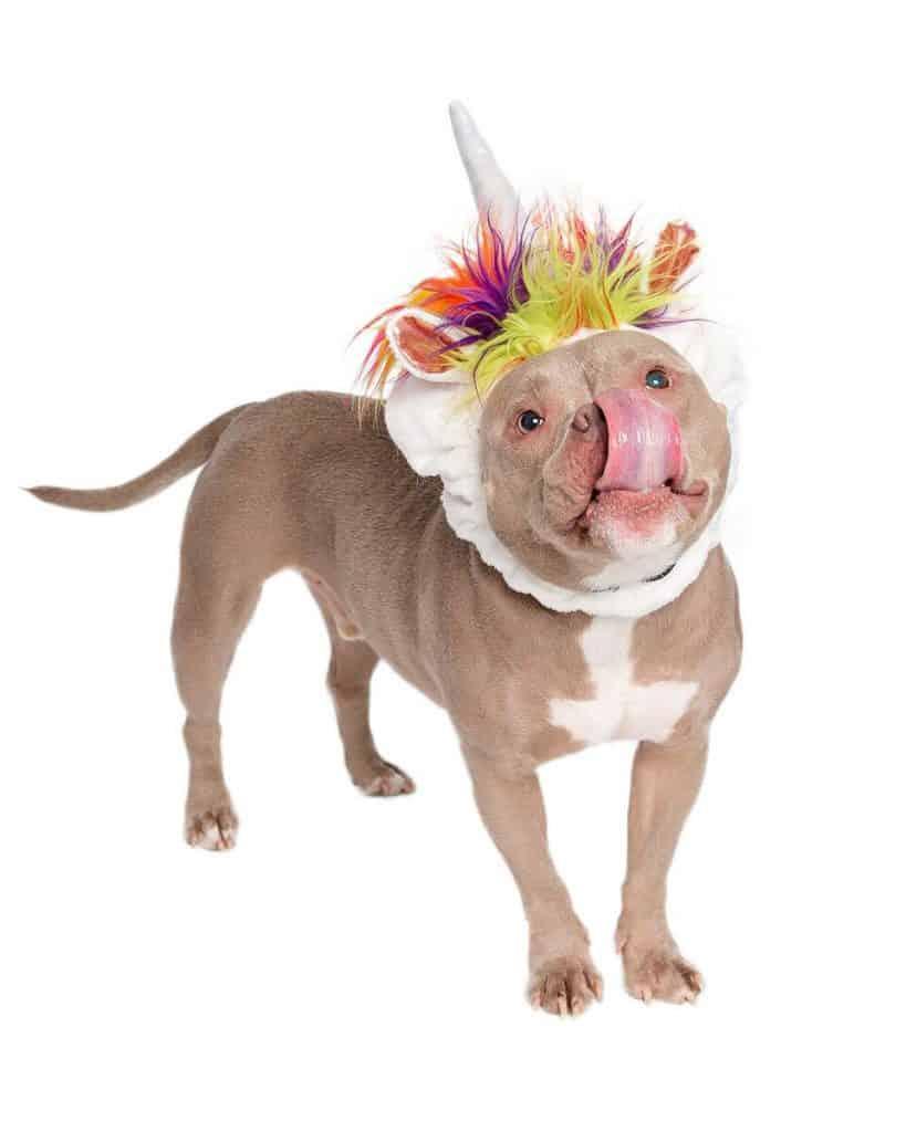 Unicorn Costume for Dogs