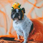 Dog dress up ideas halloween