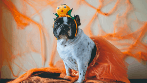 Dog dress up ideas halloween