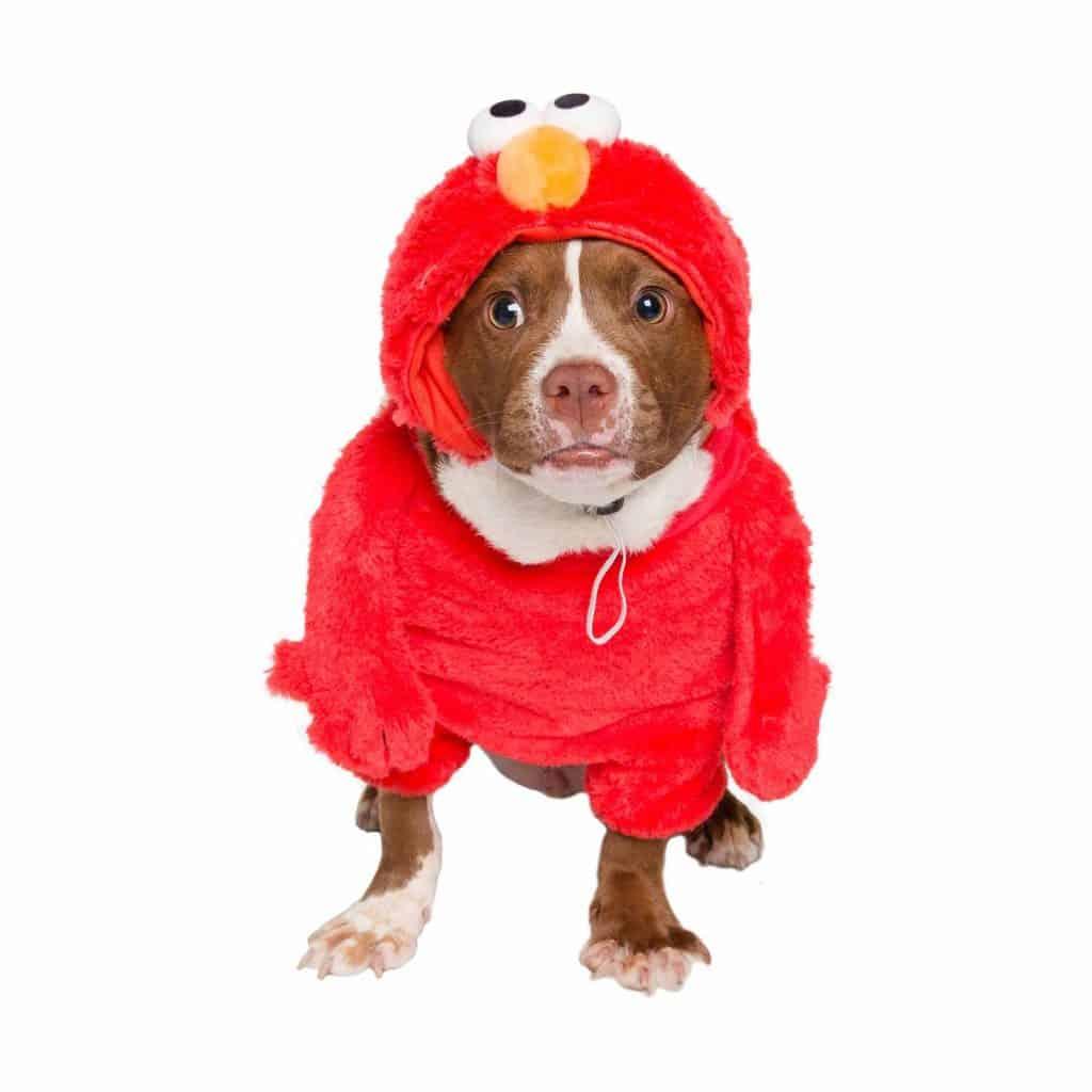 Sesame Street Elmo Dog Costume