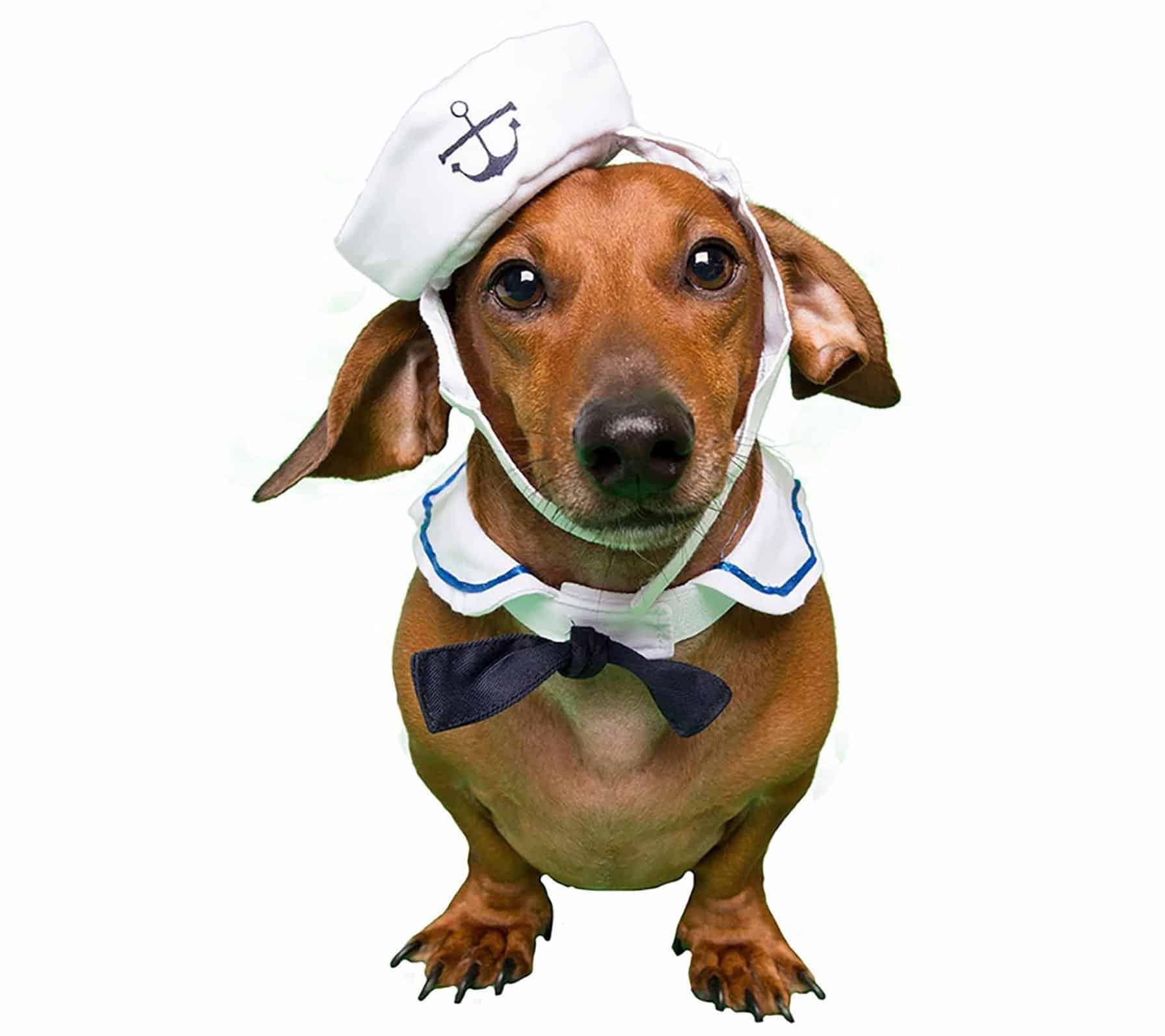Small Dog Sailor Costume