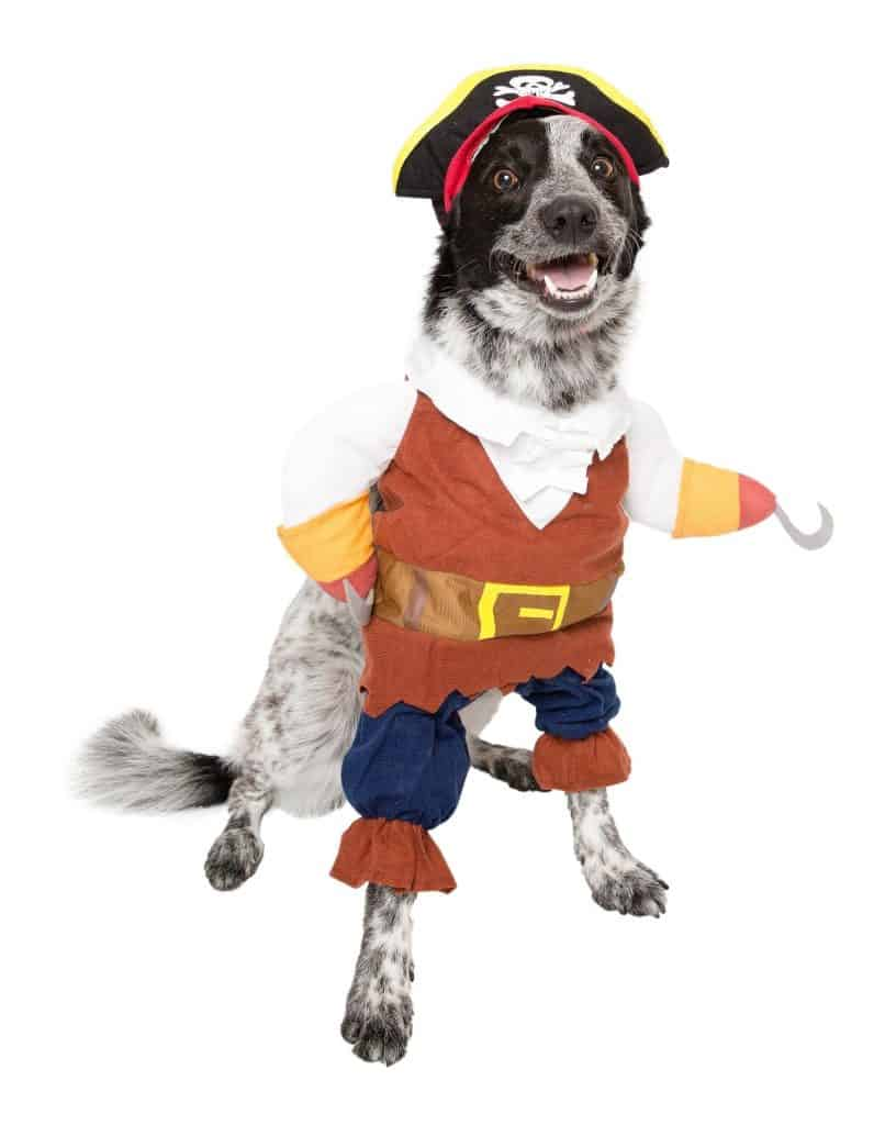 Pirate Dog Costume - Funny Outfit Idea