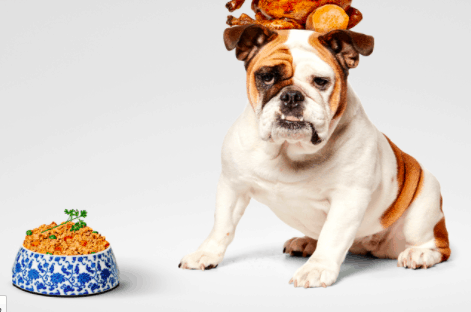 Pet Plate - Personalised Doggy Meal Plans Delivered On An On-Going Basis