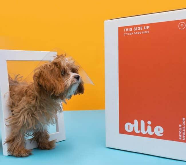 Ollie - Custom Made Fresh & Healthy Dog Food Subscription