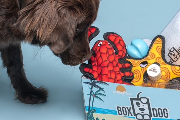 Seasonal Gift Box Subscription For Dogs - Grain Free Treats Included