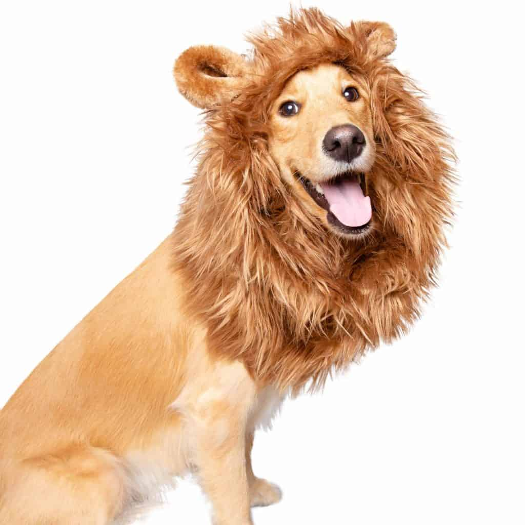 Lion Mane Costume For Bid Dogs