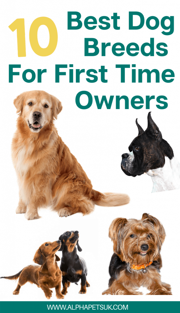 Best Low To Medium Energy Dog Breeds