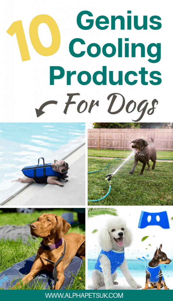 how to keep a dog cool in the summer