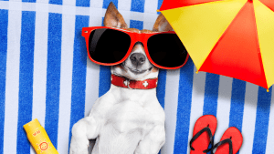 pet products to avoid heatstroke during hot months