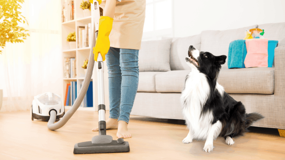 removing pet hair floor hoover