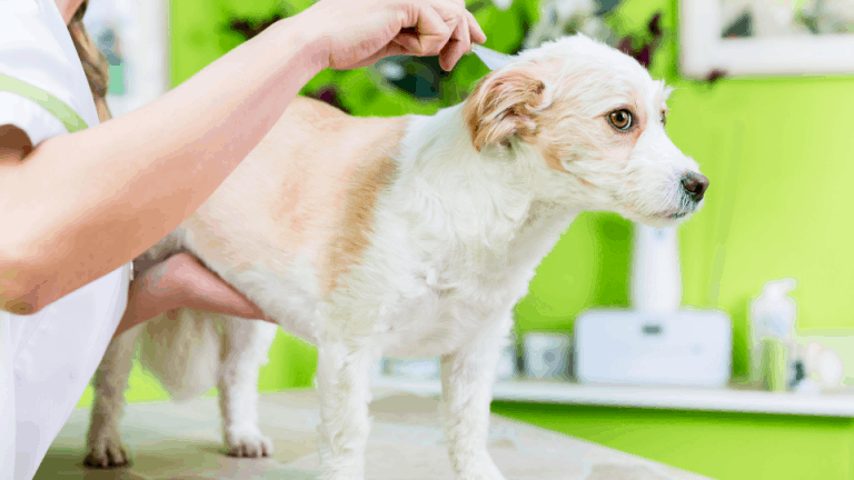 fles and ticks remedies for pets