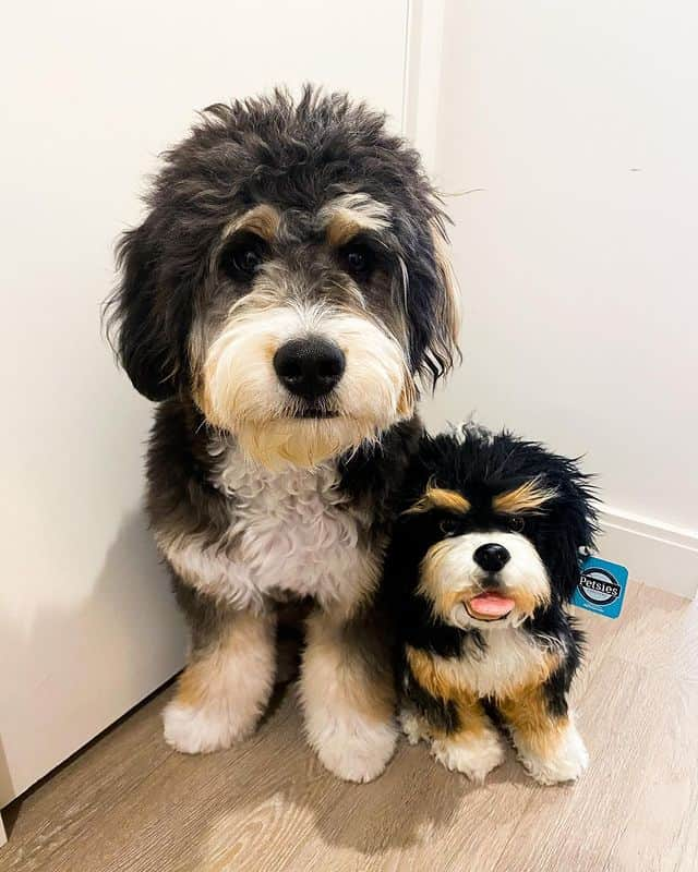 Custom Stuffed Animal Of Your Beloved Pet - Just Upload A Photo & Get A Unique Plush Toy