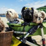 luxury pet strollers big dogs
