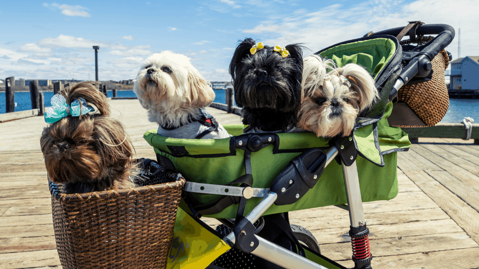 luxury pet strollers big dogs