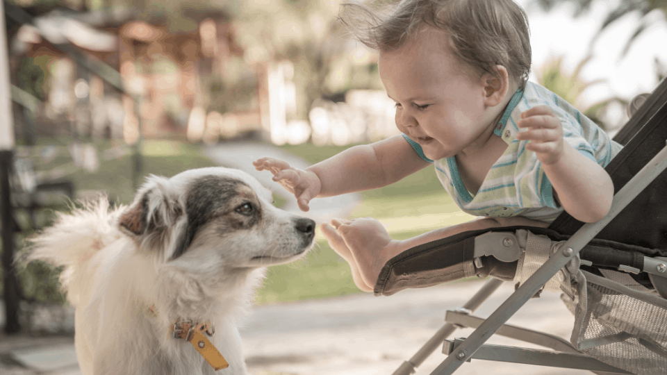 dog pushchair best reviews