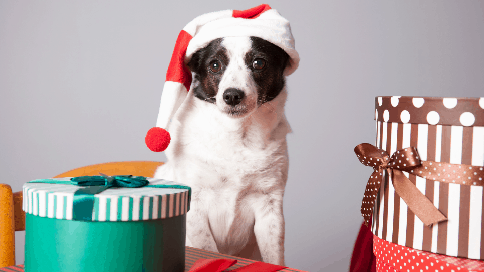 List of puppy parent gift ideas