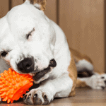 Indestructible Dog Chew Toys For Powerful Dogs