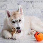 best treats for husky puppies and adults chew treats training