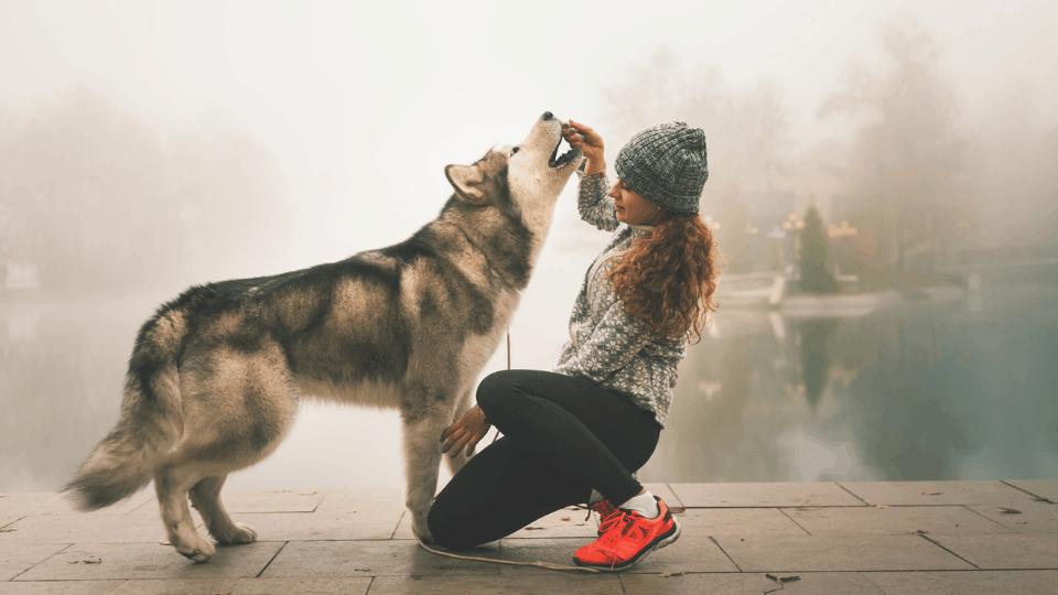 treats for dogs husky