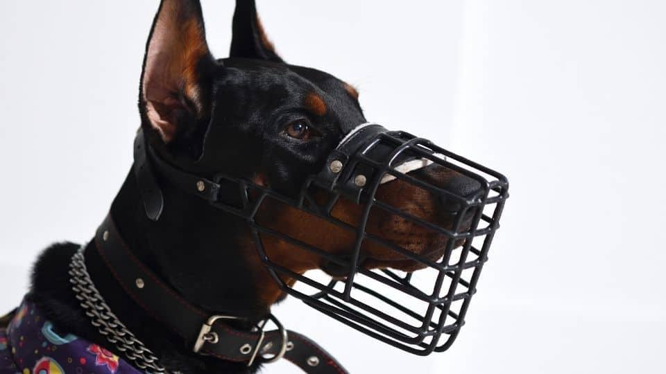 best doberman muzzle for large dogs