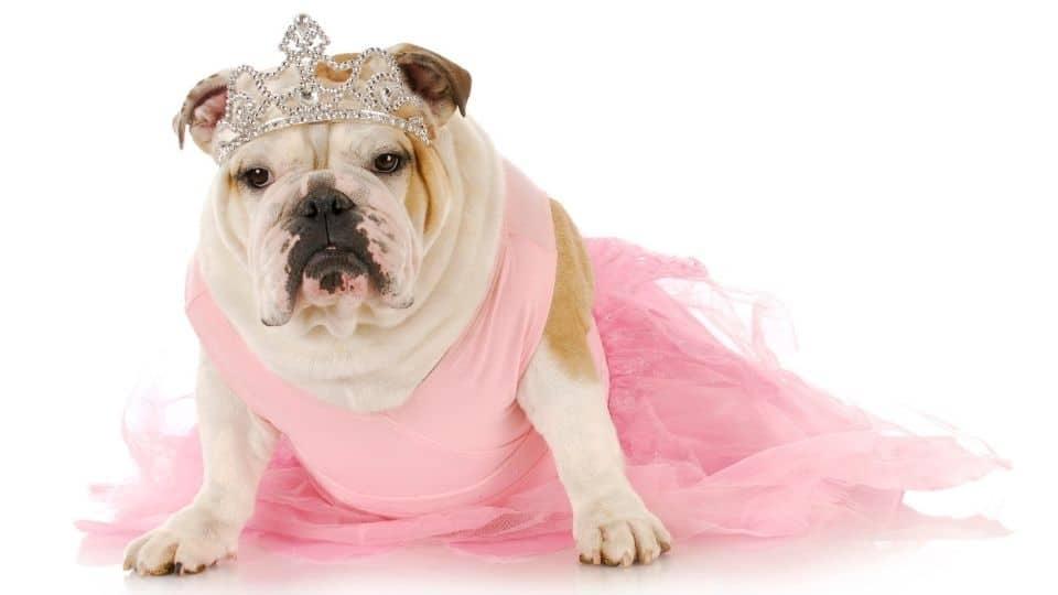 girl dog names bulldog english