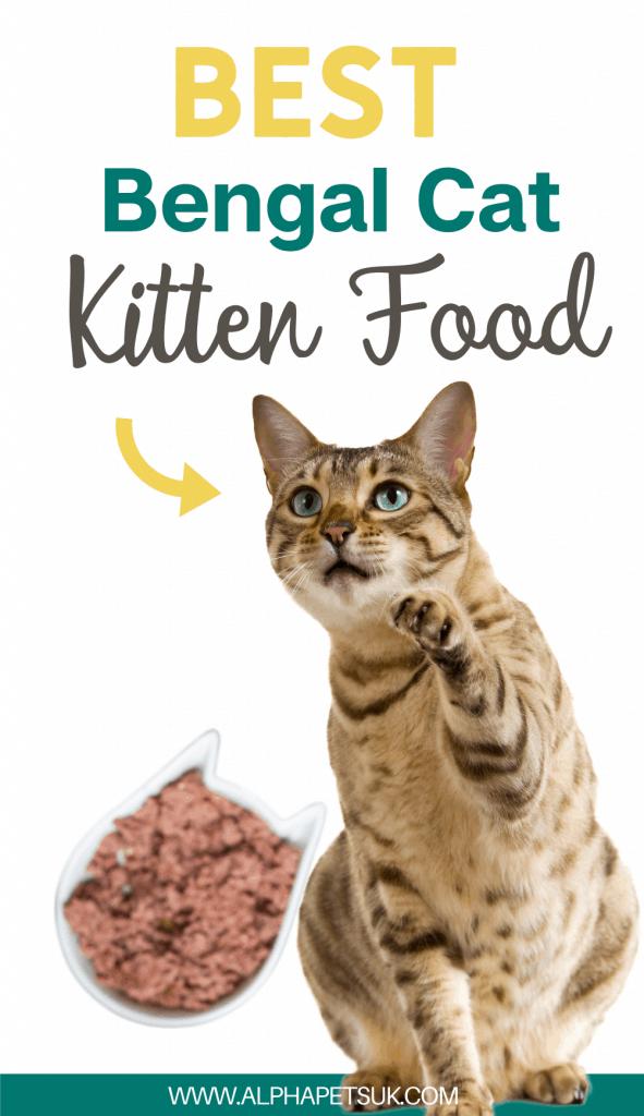 Bengal Cat Diet & Nutritious Brands